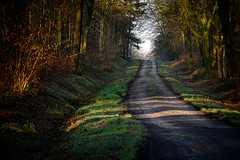 * (vieubab) Tags: nature lumire branches hiver ombre arbres paysage extrieur sentier espace chemin fort bois brume calme feuille escapade feuillage feuillesmortes troncs atmosphre branchage luminosit lumirediffuse