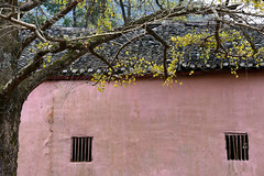 Ginkgo house (MelindaChan ^..^) Tags: china pink autumn plant fall yellow wall leaf ginkgo village guilin mel melinda guangxi 桂林 廣西 chanmelmel melindachan 小平樂 海洋鄉