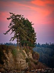 Trees on a Hill at Sunset.jpg (Eye of G Photography) Tags: sunset usa places whidbeyisland northamerica pugetsound washingtonstate sunsetsunrise firtree olympicmts mutinybay