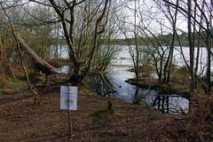 25.3.16 Delamere Forest 34 (donald judge) Tags: trees water forest countryside cheshire mere delamere