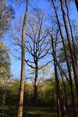 DSC_0993 (julian jones (arkansas)) Tags: travel trees plants sunlight green history nature leaves lines curves perspective shapes ground places trail arkansas height aboretum photowalking