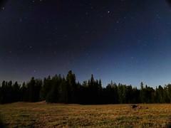 Night falls in a quiet meadow in North Idaho. #hikenorthidaho #ig_idaho #pnw #idahoadventures #idahoexplored #upperleftusa #visitidaho #visitnorthidaho @westernpleasureguestranch