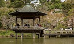 P1590720 (Rambalac) Tags: asia japan lumixgh4 pond water азия япония вода пруд