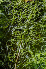 Photosynthesis (luke.me.up) Tags: ocean plants seaweed green nature water shapes algae