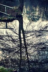 Am Teufelssee (trekkpics) Tags: travel holiday berlin berg animal rural trekking landscape see duck urlaub natur wandern grunewald reise wannsee teufelsberg teufelssee colourartaward aussflug