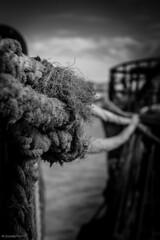 esperando la salida (Mauro Esains) Tags: patagonia puerto muelle cabo agua barco comodoro industria nudo soga rivadavia proa pesquero baranda pesquera