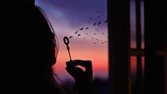 96/366: be free (Andrea  Alonso) Tags: sunset sky selfportrait me window birds contrast myself atardecer libertad freedom pajaros cielo autorretrato