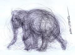 elefante a lapicero (ivanutrera) Tags: wild elephant animal pen sketch drawing wildlife draw dibujo elefante boligrafo dibujoalapicero dibujoenboligrafo