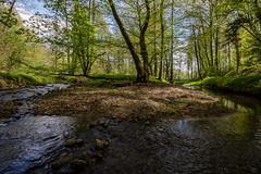 Time to heal (Laurent Moose) Tags: trees shadow creek sterreich au bach bume schatten steiermark kumberg rabnitz
