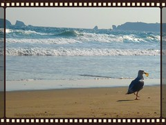 God gives every bird its food, but He does not throw it into its nest.  ~J.G. Holland (The Visual Poet) Tags: sun vintage freshair togetherness sand walks waves time seagull memories photograph senses arcadefire talks pringle songonthebeach