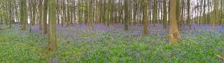 Crawley Wood panorama
