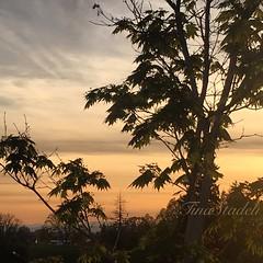 One last look... (Tina Stadeli) Tags: park leaves