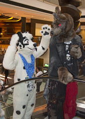 _DSC8247 (Acrufox) Tags: midwest furfest 2015 furry convention december hyatt regency ohare rosemont chicago illinois acrufox fursuit fursuiting mff2015