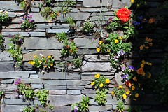 Flower Wall (rreyn92) Tags: flowers shadow red lake colour green nature beautiful yellow rock wall idea spring natural bright vibrant decorative district sunny fresh shade colourful ambleside clever