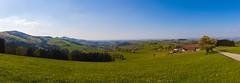 _MG_0930-Pano (TobiasW.) Tags: austria blossom blossoms pear flowering blte niedersterreich obersterreich blten 2016 birnbaum upperaustria loweraustria mostviertel birnbaumblte weises moststrasse moststrase peartee