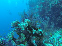Sudan. GoPro (Vladislav Sournine) Tags: travel underwater sudan diving safari 2016 gopro