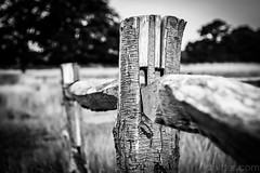 Untitled (#Weybridge Photographer) Tags: park wood slr london canon fence eos wooden post royal adobe dslr lightroom bushy 40d