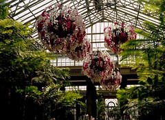 longwood gardens / mamiya m645 (bluebird87) Tags: flowers mamiya film gardens kodak pa epson 100 v600 longwood ektar c41 m645 dx0