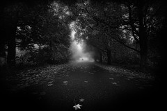 I will Find You (EmeraldImaging) Tags: road autumn trees blackandwhite leaves fog sunrise countryside leaf sydney australia nsw wollongong bowral robertson mittagong