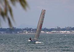 P1010197 (LoxPix2) Tags: boat sailing brisbane catamaran lox aclass no755 loxpix boyermarkiv