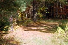 DSC_6018 (Rustam Bikbov) Tags: autumn september 2012    sverdlovskoblast
