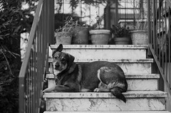 Happy Life (Letizia Da Re) Tags: dog pet sun animals dark happy nikon day shadows bright bn ear doggy nikkor ligh d7000 nikond7000