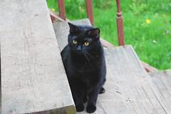 48/365 (JennaAbbottPhotography) Tags: cat kitty 365 prettykitty outdoorcat 365day 365dayproject
