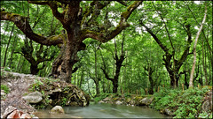 Jungle River 1 (Poria) Tags: wood trees tree green nature water stone forest river landscape landscapes view wave jungle  natures