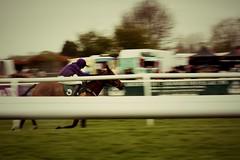 Warwick Races - horse racing in motion (rjhavfc82) Tags: horse movement racing warwick
