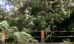 And crosses bridges... (vantcj1) Tags: ro puente bosque baranda