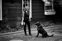 in the zone (fallsroad) Tags: blackandwhite bw dog person lab chocolate servicedog labradorretriever assistancedog seizureresponsedog