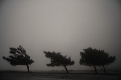 Wind Shaped Trees (Ephemeral Movies) Tags: trees mist bend wind windy greece bent kythera