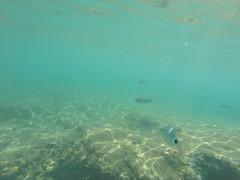 GOPR6798 (winglet777) Tags: sea vacation croatia arena kanal pula hrvatska istra kroatien limski brijuni kamenjak istrien gopro hero3 sonyrx100