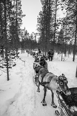 _DSC0260 (Alepan) Tags: finland finlandia lapponia circolopolareartico