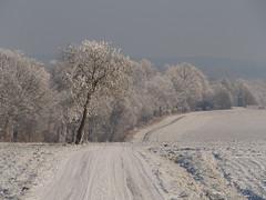 Schwalmstadt_Frost_22_01_2016_37 (Oliver Deisenroth) Tags: schnee trees winter snow ice frozen frost seasonal wintertime eis bäume gefroren