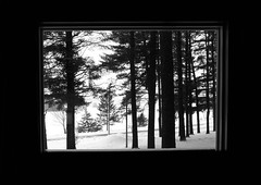 Window on Winter. (Nance Fleming) Tags: trees winter blackandwhite monochrome scenic frommywindow throughawindow lookingout winterscene coldoutside wintryscene