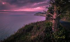 Sunset-Ebey's Landing.jpg (Eye of G Photography) Tags: sunset plants usa tree places whidbeyisland northamerica pugetsound washingtonstate sunsetsunrise skyclouds hillroad ebeylanding