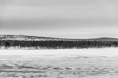 _DSC0441 (Alepan) Tags: finland finlandia lapponia circolopolareartico