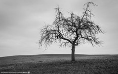 The Tree on the side of the Path. (andreasheinrich) Tags: blackandwhite tree germany landscape deutschland moody felder fields february landschaft baum stimmungsvoll badenwürttemberg blackandwhitephotos neckarsulm schwarzweis nikond7000