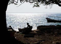 El pescador (Races annimas) Tags: costa arbol atardecer mar colombia pescador caribe pescar pelcano islafuerte arbolquecamina
