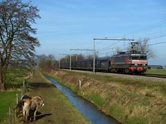Captrain 1619 (jvr440) Tags: railroad train 1600 railways trein amersfoort spoorwegen freighttrain soest 1619 eempolder autotrein goederentrein raillogix captrain