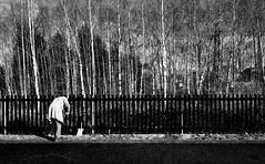 Dysgub y dail, Y Dref-wen / Sweeping leaves, Whitchurch (Rhisiart Hincks) Tags: blackandwhite bw blancoynegro blancinegre blancetnoir duagwyn zwartenwit zuribeltz feketefehr dubhagusbn gwennhadu siyahvebeyaz  juodairbalta ernabl mustajavalkoinen  crnoibelo melnsunbalts negruialb dubhagusgeal  rnoinbelo
