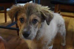 Day 306. I've taken a few photos this morning but don't like the way they came out. I'll have to fall back on Savannah's cuteness. This is from the first day I got her, fresh out of the shower. Not sure what I was thinking adopting such a young pup, but d