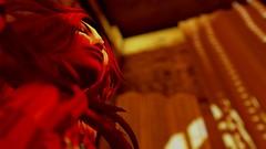 Warm face (Myra Wildmist) Tags: red face yellow warm warmth headshot secondlife lowangle windlight myrawildmist