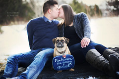 Some Pug Love (AM Productions LLC) Tags: cute alex sign wisconsin puppy diy engagement claire am couple eau natural pug martinez productions