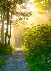 20150930 Sun shining through the mist in Culzean Country Park (eyesomepics) Tags: trees forest woodland scotland path scottish sunrays ayrshire culzean