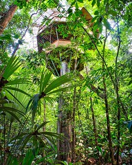 Day 316. Last few hours at Finca Bellavista. Blisters have healed and muscles are a little less sore. Morning yoga soon to stretch it all out, then hitting the road and make my push to Panama City. (This is El Castillo, ninety feet off the jungle floor).