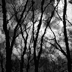 Trees In Water 080 (noahbw) Tags: trees winter shadow sky blackandwhite bw distortion abstract reflection water monochrome silhouette clouds forest river square landscape blackwhite woods nikon natural branches desplainesriver explored d5000 captaindanielwrightwoods noahbw