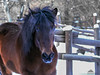 Gigia ✻ (Xena*best friend*) Tags: wood winter wild horses italy pet snow cold animals fun woods flickr walk piemonte fields paws wildanimals gigia piedmontitaly ©allrightsreserved canonef70300mm horsesinthesnow canoneos500d eosrebelt1i