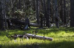 Forest Border I (Joe Josephs: 2,650,890 views - thank you) Tags: california trees landscape westcoast forests fineartphotography travelphotography californialandscape landscapephotography outdoorphotography fineartprints fiscaliniranchpreserve joejosephsphotography